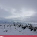 بارش سنگین برف در قهاوند (2)
